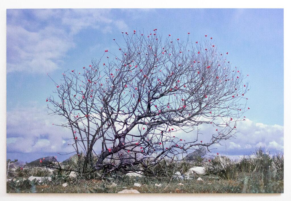 Giuseppina Giordano, SICILY KAWAII (tree), 2021